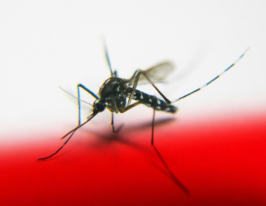 Damit der Sommer nicht zur Plage wird – Natürliche Hilfe bei Insektenstichen